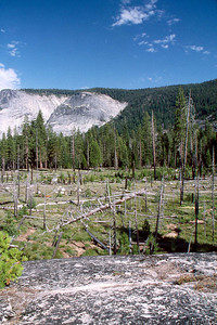 Ref: 0307M30 ... July 16 2003 ... Yosemite National Park California - Rich Dunhoff Memorial Trip - Part of panarama view from rock dome where we spread Rich's ashes in Little Yosemite Valley just north of campground. ... Photographed by Heather Page