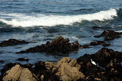 Waves crash as an egret fishes on the rocks at Point Joe - Monterey, CA ... March 11, 2009 ... Photo by Rob Page III