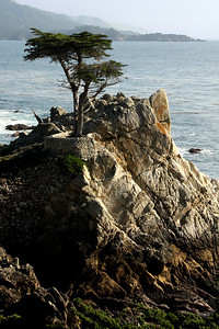 The Lone Cyprus on 17-mile drive - Monterey, CA ... March 11, 2009 ... Photo by Rob Page III