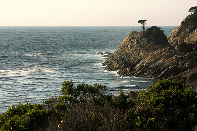 The Lone Cyprus - Monterey, CA ... March 11, 2009 ... Photo by Rob Page III