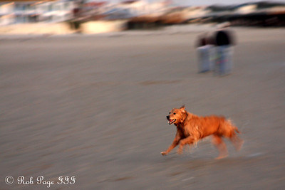 A dog enjoys the beach - Pismo Beach, CA ... March 9, 2009 ... Photo by Emily Page