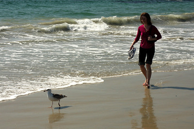 Chasing after the bird - Laguna Beach, CA ... March 7, 2009 ... Photo by Rob Page III