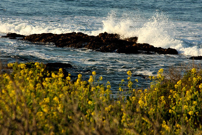 Waves breaking - Cambria, CA ... March 10, 2009 ... Photo by Rob Page III