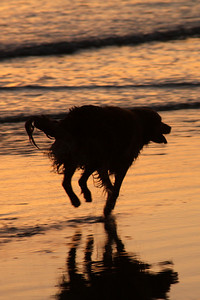 A dog enjoying the beach - Pismo Beach, CA ... March 9, 2009 ... Photo by Emily Page
