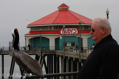 Pelican - Huntington Beach, CA ... March 15, 2012 ... Photo by Rob Page III