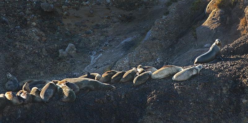 Point Lobos Harbour Seals