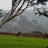 Pebble Beach, California 0679