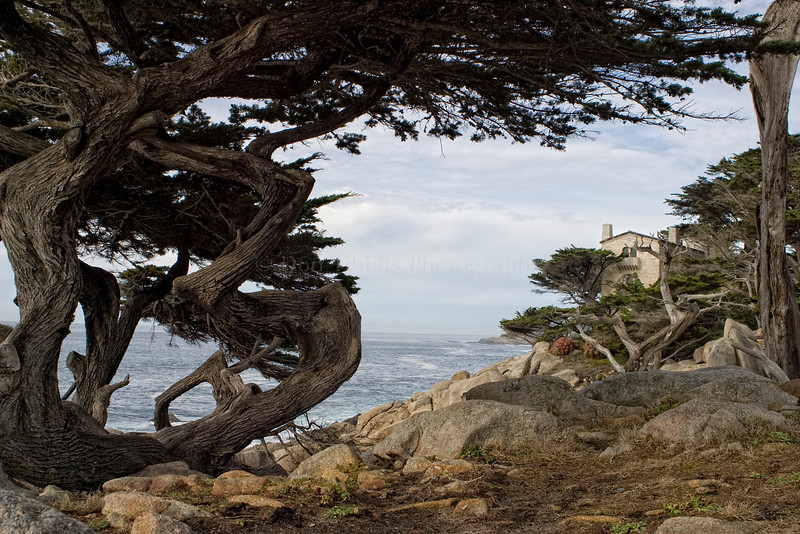 Pebble Beach, California 0698