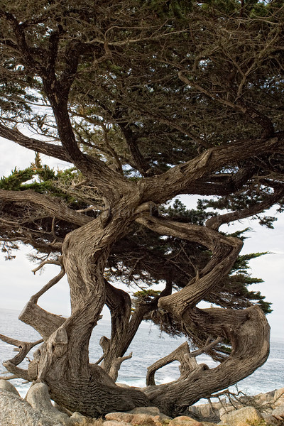 Pebble Beach, California 0699
