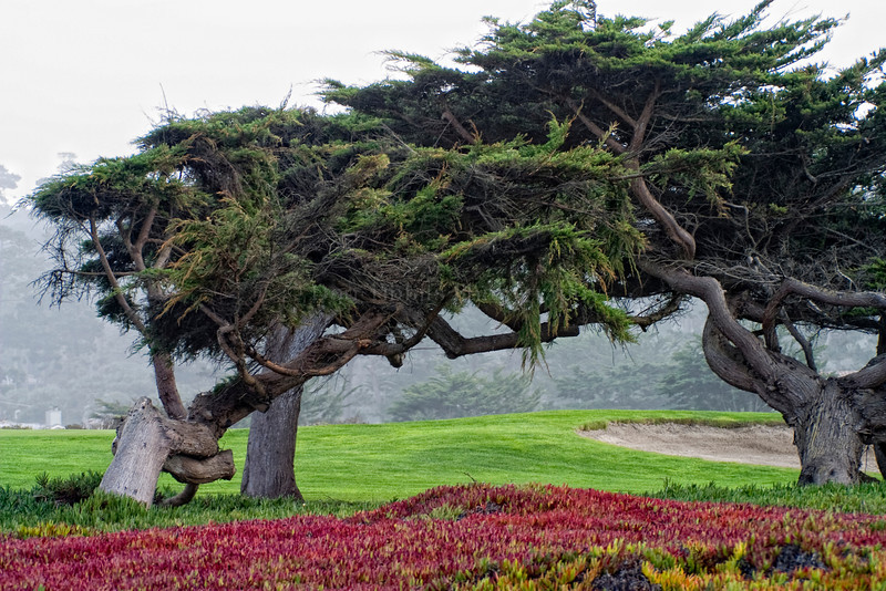 Pebble Beach, California 0674