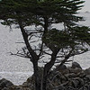 Pebble Beach, California 0686