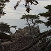 Pebble Beach, California 0693