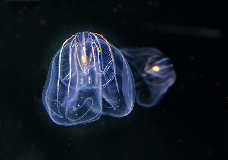 Aquarium of the Pacific - Long Beach