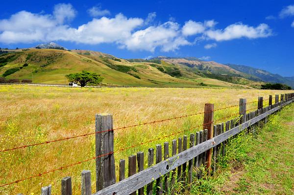 California Landscape - canvass