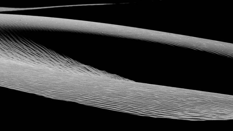 Death Valley, Mesquite Flat - Dune telephoto with intersecting curves, black and white