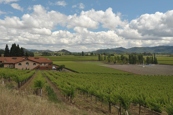Mumm's Estate Winery