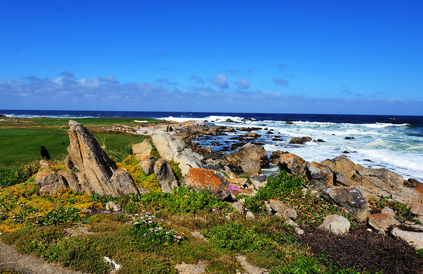 Golf course on 17 mile drive
