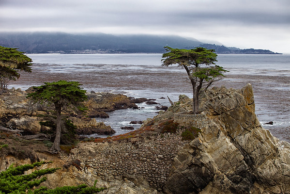 Famous pine on the 17 Mile Drive near Carmel