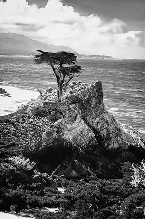 Lone Cypress B&W