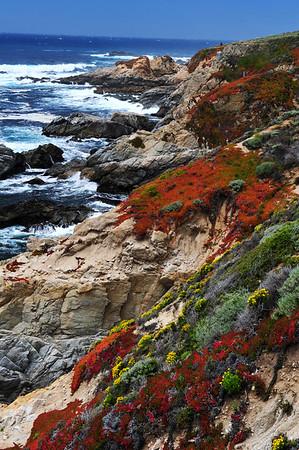 Big Sur Coastline with flowers
