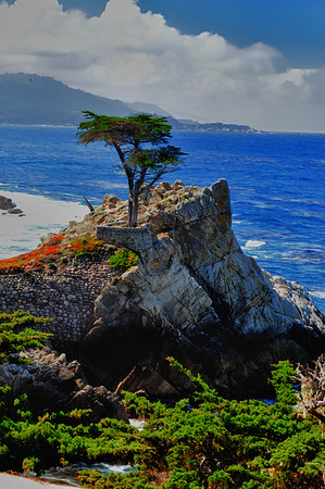 Lone Cypress copy