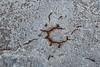 Death Valley, Patterns - White salt with circular brown pattern, above
