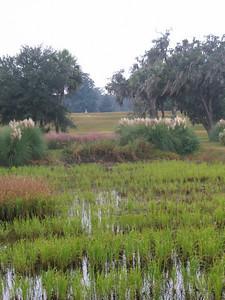 rice paddy at middleton