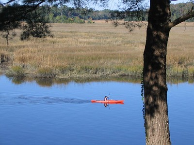 kayaking down the ashley river