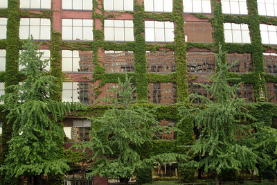 Ivy takes over one of the buildings along the Chicago River - Chicago, IL ... September 23, 2006 ... Photo by Rob Page III