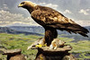 Golden Eagle Diorama. The Denver Museum of Nature & Science