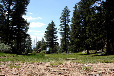 The meadow below the Devil's Head fire lookout - San Isabel National Forest, CO ... July 14, 2006 ... Photo by Rob Page III