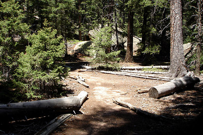 Along the path to Devil's Head - San Isabel National Forest, CO ... July 14, 2006 ... Photo by Rob Page III