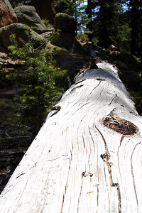The nature along the trail - San Isabel National Forest, CO ... July 14, 2006 ... Photo by Rob Page III