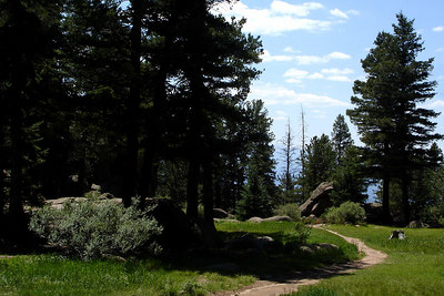 The meadow below the Devil's Head fire outlook - San Isabel National Forest, CO ... July 14, 2006 ... Photo by Rob Page III