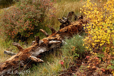 Rocky Mountain N.P., CO ... September 20, 2008 ... Photo by Rob Page III