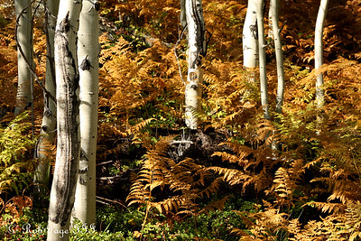 The colorful forest floor - Rocky Mountain N.P., CO ... September 20, 2008 ... Photo by Rob Page III