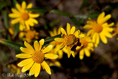 Wildflowers - Colorado ... September 4, 2011 ... Photo by Rob Page III