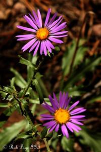 Wildflowers - Colorado ... September 4, 2011 ... Photo by Rob Page III