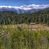 Upper Beaver Meadows