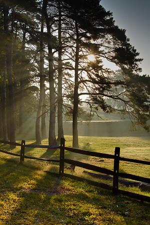 Sunlight Pine, Dayton Ohio