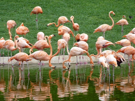 Pink Flamingos, Miami - USA