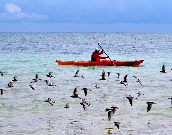 Kayaker and birds