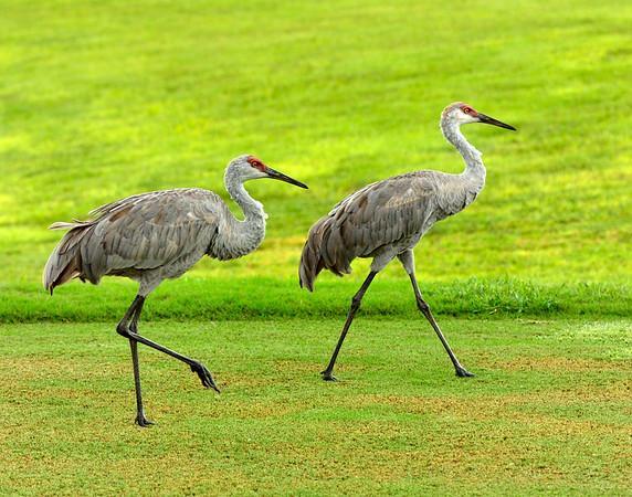 Birdies side by side