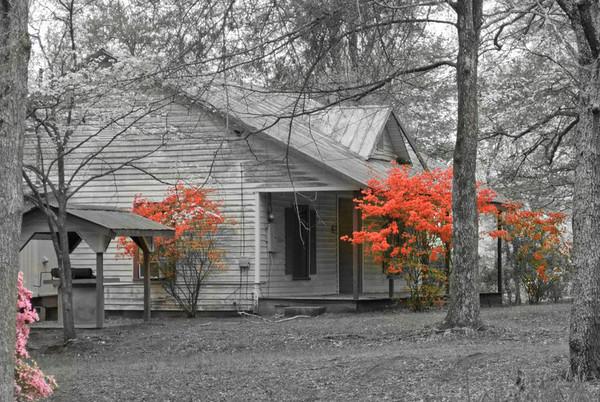 Cabin & Azaleas, Atlanta, Georgia