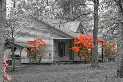 Georgia Cabin In Spring