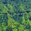 Alakai Swamp Trail - Kilohana Lookout