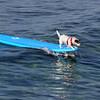 Honolulu Surfer