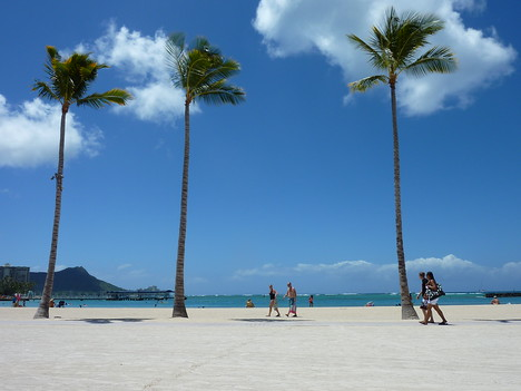 Waikiki Beach Trees, Honolulu - Hawaii