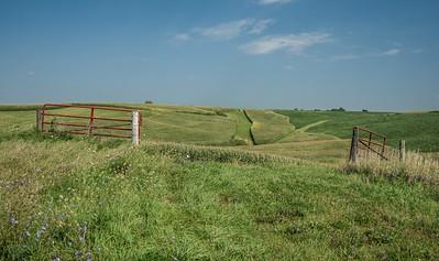Country Corn, Iowa