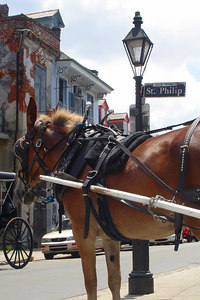 A horse resting on St. Philip St. - New Orleans, LA ... August 6, 2005 ... Photo by Rob Page III